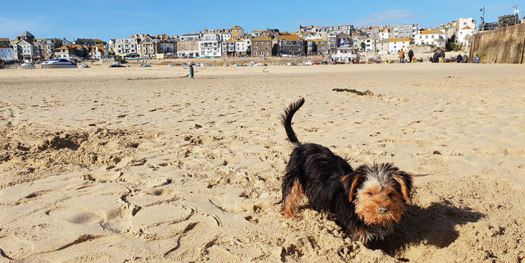 Dog-friendly beaches in St Ives Bay explore image