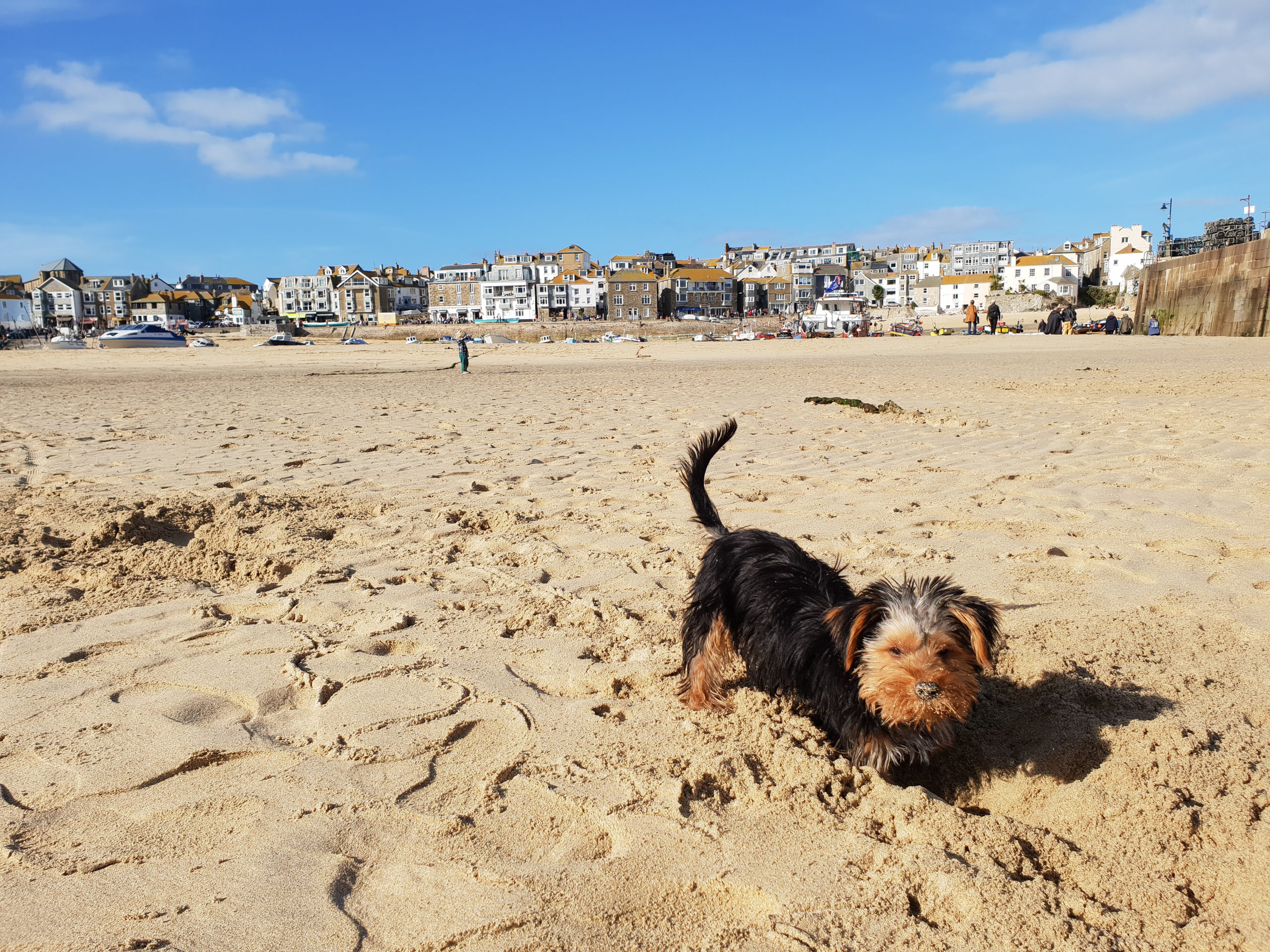 Dog-friendly beaches in St Ives Bay